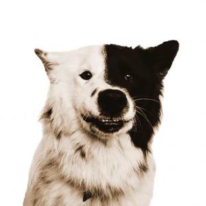 Anuki Therapie Hund