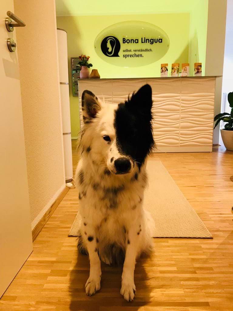 Unser Therapie Hund freut sich auf große und kleine Patienten